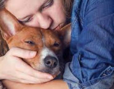 Eutanasia en animales: un acto de amor cuando ya no hay cura ni antídoto para el sufrimiento de nuestras mascotas